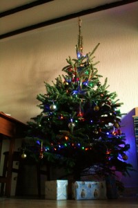 Christmas tree, real tree, festive, spruce, fir