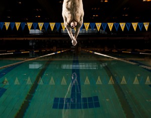 Tommy Gossland dives into the UBC Aquatic centre pool. Picture Copyright Geoff Lister/The Ubyssey.